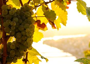 Weinproben in Mehring an der Mosel